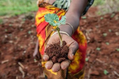 CGIAR soil