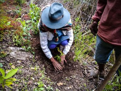 Bosques de Kiuñalla, Apurímac. Foto de CEDES Apurímac.