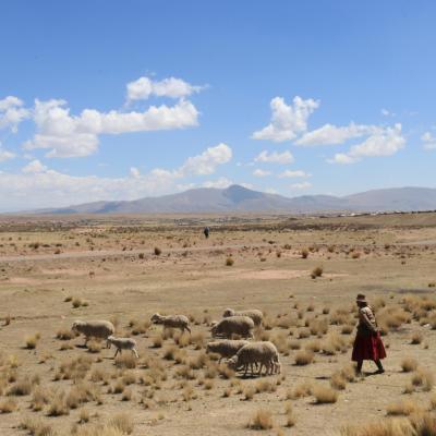 Comunidad de Churo López en el altiplano de Puno a 3902 m. de altitud. (M. Dapozzo)