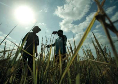 rice farmers Mozambique