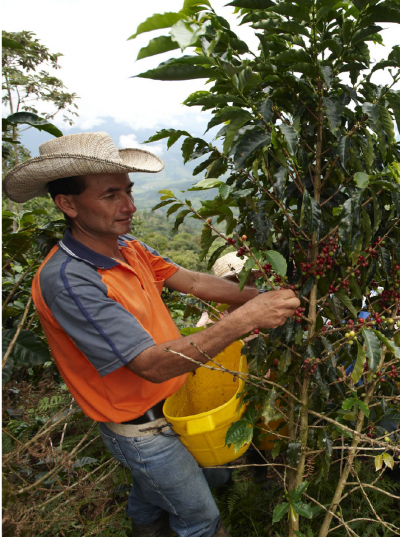 Coffee grower in Bolivia
