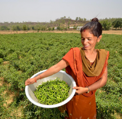 Growing Beans, Western Nepal