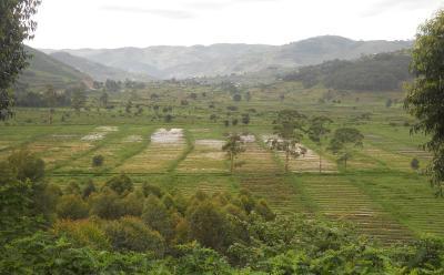 Landscape from Uganda