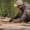 Farmer sorting coffee pods