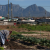 51cd6a470024c51c311638b1cfa-vegetable-farmer-in-philippi - climate adaptation.