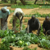 53466f4b35b12africare-preventing-run-off-in-niger - climate adaptation.