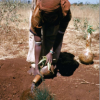 536c985ebf66ceacc-ethiopia-image - climate adaptation.