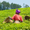 fcfa rwanda - climate adaptation.
