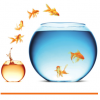 ukcip goldfish - climate adaptation.