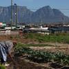 51c311638b1cfa-vegetable-farmer-in-philippi - climate adaptation.