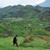 cdkn uganda - climate adaptation.