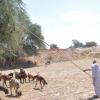 goat herder pakistan