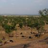 Landscape india