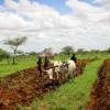 uganda wetlands project