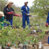 workers tend to plants in restoration project in South Africa