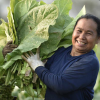 Local Solutions: Adapting to Climate Change in Small Island Developing States