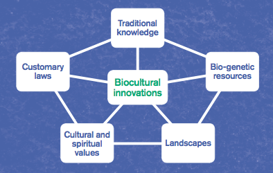 Figure 1 from poster. Biocultural heritage is made up of interdependent parts. Interactions between these result in biocultural innovations.